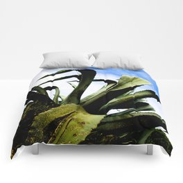Large Giant Green Aloe Plant with Bright Blue Sky Comforters
