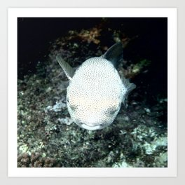 Snorkeling, The Blowfish Art Print