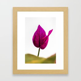 flower photography by Jason Leung Framed Art Print