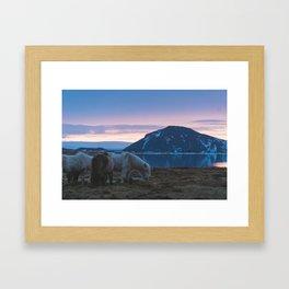Icelandic Horses and Sunsets Framed Art Print