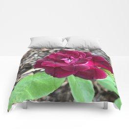 Late Bloomer Comforters