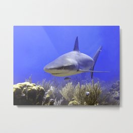 Shark Swimming Into Shot Metal Print