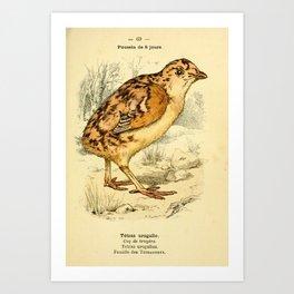 Western Capercaillie Art Print