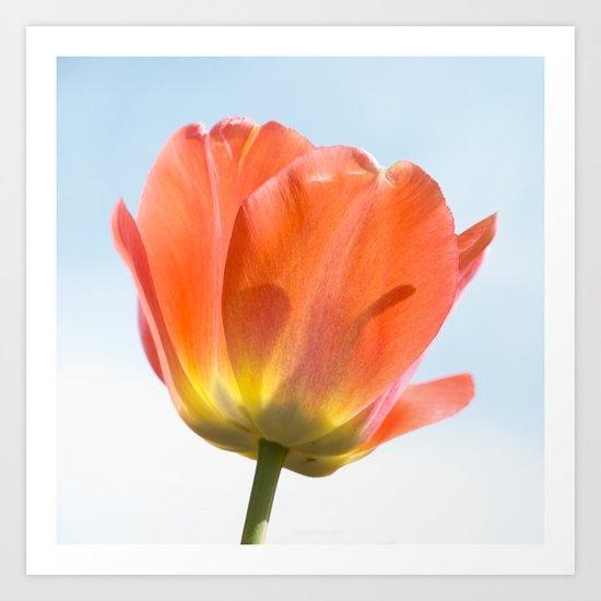 Tulip Series 2 Art Print