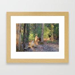 Deer Buck Cades Cove, TN Framed Art Print