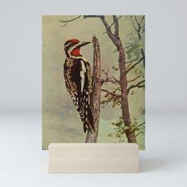 Vintage Print - Birds and Nature (1901) - Yellow-Bellied Sapsucker Mini Art Print