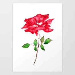 one red rose watercolor  Art Print