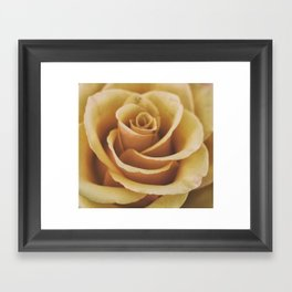 Rose Textures Framed Art Print