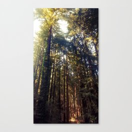 Listen to the Redwoods Canvas Print