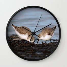 A Pair of Sanderlings Shares: A Meal is Better When Eaten Together Wall Clock