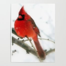 King Cardinal II Poster