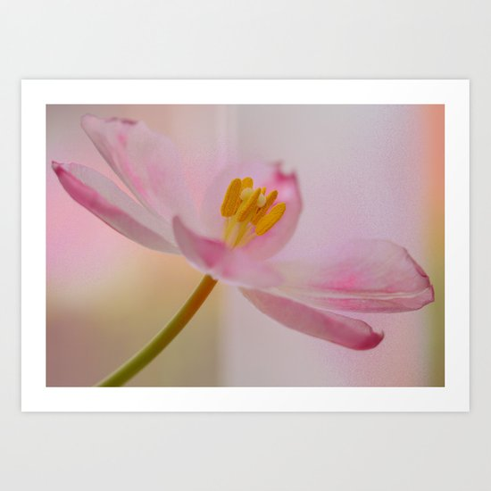 Dreamy Pink Art Print