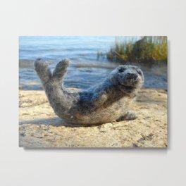 Harbor Seal on the rocky Maine coast Metal Print