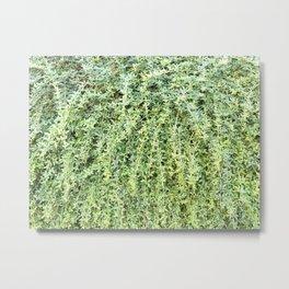 Green Leaf Wall wide Metal Print
