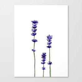 Lavender Flowers. Canvas Print
