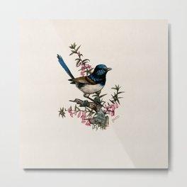 Australian Blue Wren Metal Print