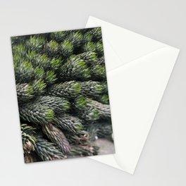 Haworthia coarctate - botanical photography Stationery Cards