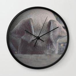Pig in Oconaluftee Wall Clock