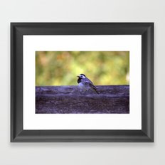 White Wagtail 4123 Framed Art Print