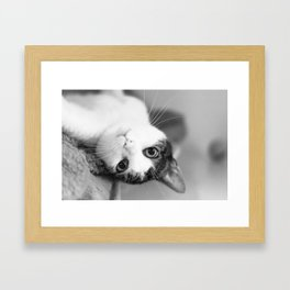 Upside down cat Framed Art Print