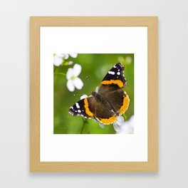 Red Admiral Butterfly Framed Art Print