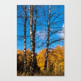 4 birches Canvas Print