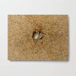 Little crab peeking Metal Print