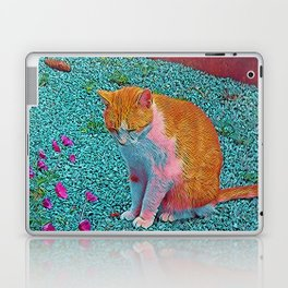 Popular Animals - Cat Laptop & iPad Skin