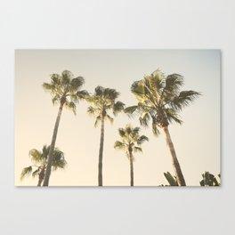 Palms. At the beach. Loving summer Canvas Print