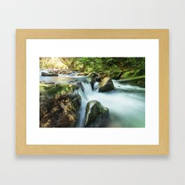 River, Biodiversity Atlantic Forest Framed Art Print