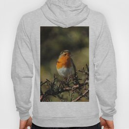 European Robin Donegal Ireland 87 Hoody