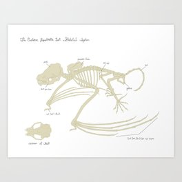 The Eastern Pipistrelle Bat Skeletal System Art Print