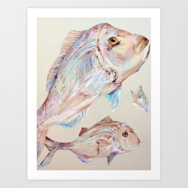 Pink Snapper Fish Art Print