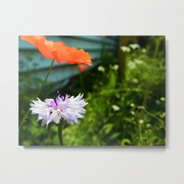 centaurea cyanus and papaveroideae Metal Print