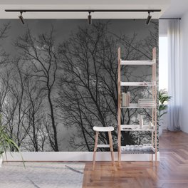 Black and white high naked trees Wall Mural