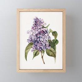 Lilac Branch Framed Mini Art Print