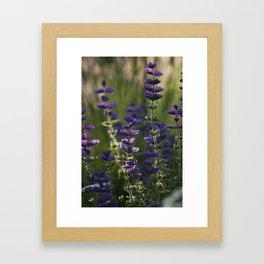 Purple Bow Ties Framed Art Print