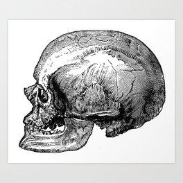 Male Cro-Magnon Skull Art Print