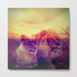 Magic Animals Lions Metal Print
