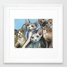 Sphynx Kittens Framed Art Print