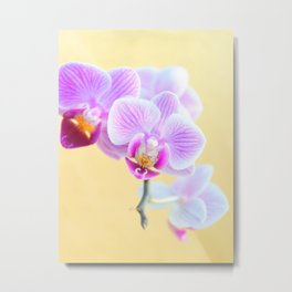 Pink and White Orchid - Flowers with Golden background Metal Print