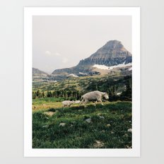 Montana Mountain Goat Family Art Print