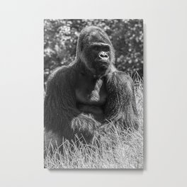 Gorilla Portrait Animal Wildlife Primate Ape Photography Black White Metal Print