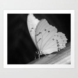 Papillon B/W Art Print