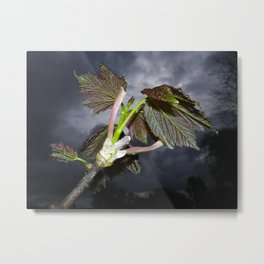 SYCAMORE LEAVES WITH STORMY SPRING SKY Metal Print