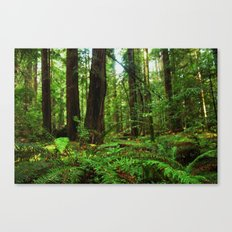 A Glimpse of the Redwoods. Canvas Print