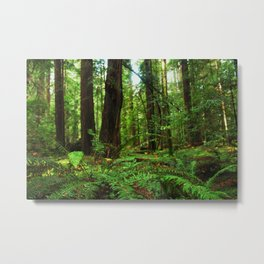 A Glimpse of the Redwoods. Metal Print
