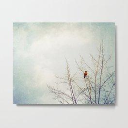 Bird in Tree Photography, Robin Birds Sky Photo, Light Blue Nature Metal Print