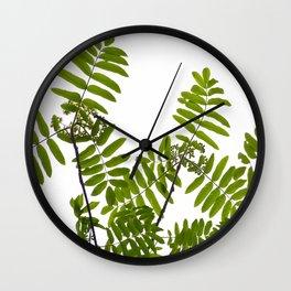 New Green Leaves Of A Rowan Wall Clock