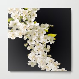 Cherry Flowers On Black Background #decor #society6 #buyart Metal Print
